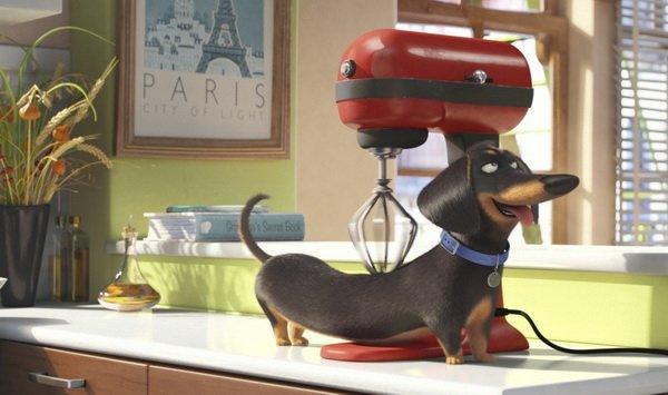 Самые ожидаемые фильмы лета 2016 | картинка The Secret Life of Pets 26